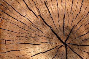 Xylo Services pour l'industrie du bois